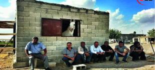 Kobanê sınırında herkes bekliyor!(Atlar hariç değil)