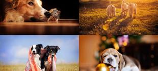Ksenia Raykova'nın birbirinden harika köpek fotoğrafları!