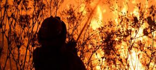 Avustralya'nın  ormanları yanıyor!