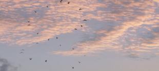 Sıcak bir aşk hikayesi: Lichen