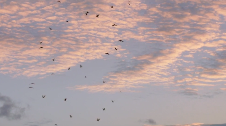 Sıcak bir aşk hikayesi, Lichen, lichen short film, kevin lim, kısa film, video, manşet,