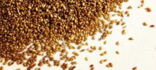 Teff tohumu çayı tarifi nedir? Kilo vermek için nasıl içilir?