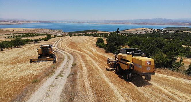 Elazığ'da 600 dönüme arpa eken başkan, hasada başladı