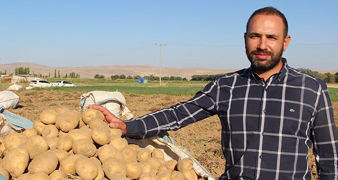 Cipslik patates satış fiyatları üreticisinin yüzünü güldürüyor